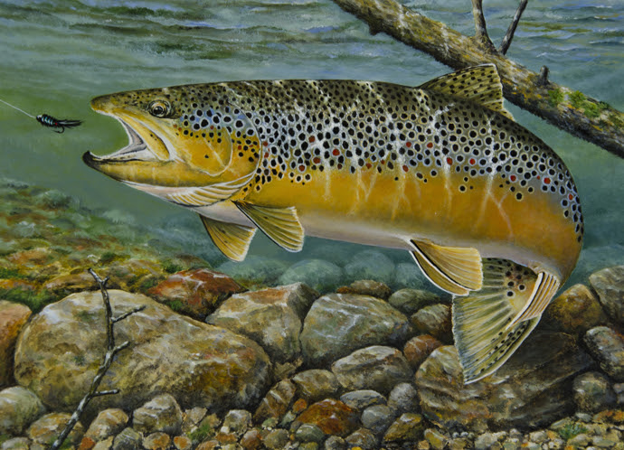 2016 Trout and Salmon Stamp Competition.  First Place:  Dean Kegler